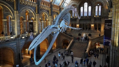 Treasures Not To Be Missed At Natural History Museum London