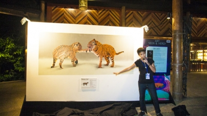Art Seen & Herd Celebrates World Environment Day, Night Safari