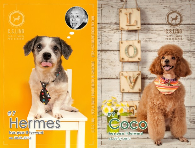 AspirantSG - Paw It Forward Session 7 & 9 With Hermes & Coco