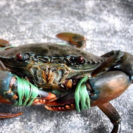 Singapore Ultimate Crab Feast