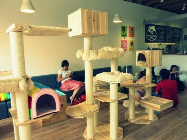 Cat Cafe Neko no Niwa - AspirantSG