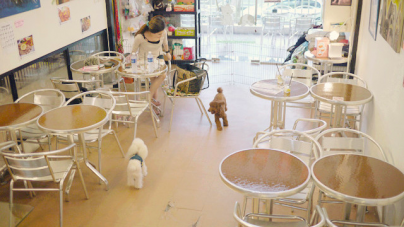 Top Pet Friendly Cafes In Singapore – Best Pet Hangout Cafes