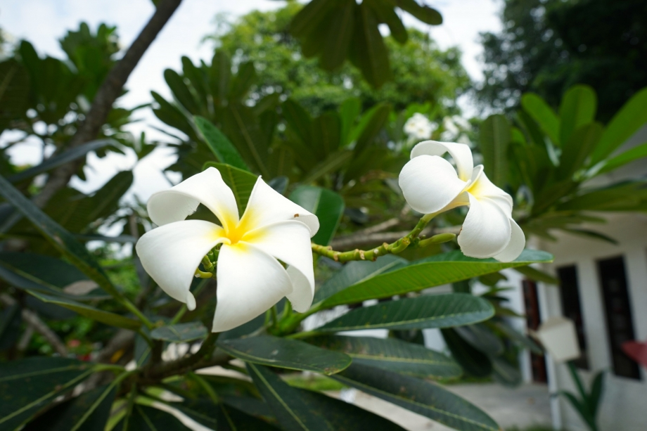 Flowers Along Fort Canning Park Foothills - AspirantSG