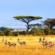 Beginners Guide To Hunts And Safaris In Africa