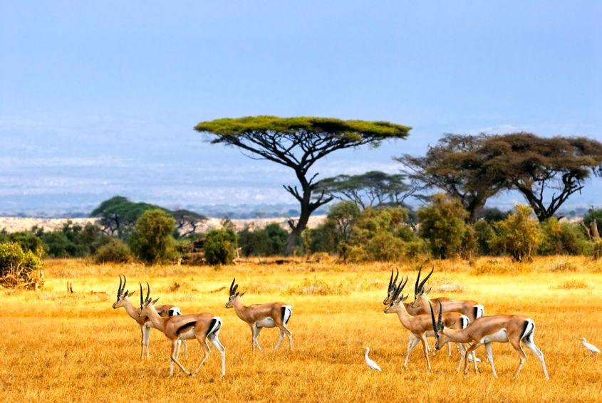 Savanna African Safari Landscape - AspirantSG