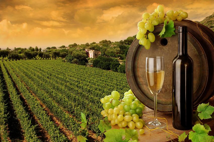 Tuscany Wine Tasting - AspirantSG
