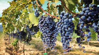 Top Italian Destinations To Savour Best Sips For Wine Lovers