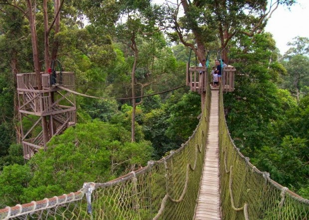 Wana Wisata Forest - AspirantSG