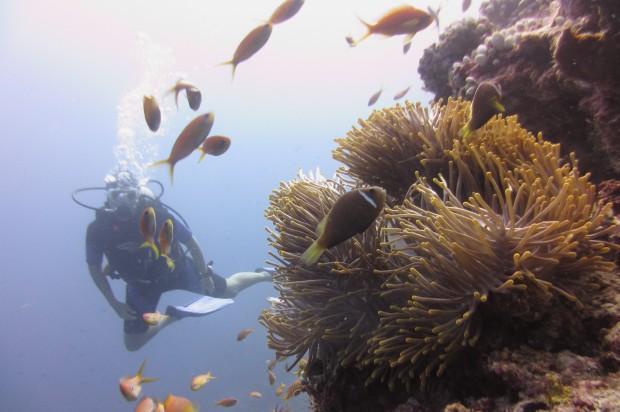 Deep Sea Diving Maldives - AspirantSG