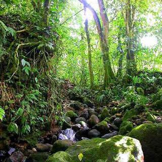 Preserve Forest Wein River - AspirantSG