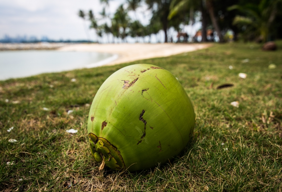 Coconut On Sisters Islands - AspirantSG