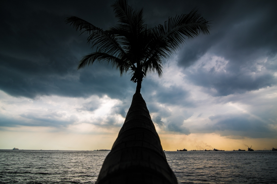 Shadow Of Coconut Tree On Sisters Islands Singapore - AspirantSG