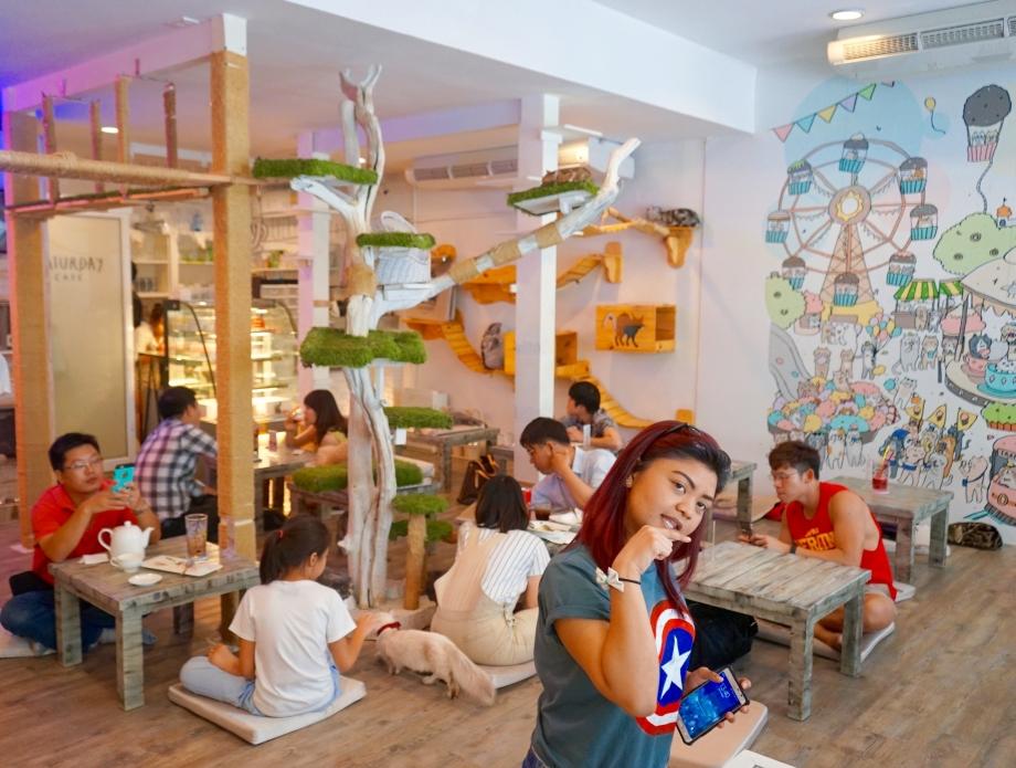 Caturday Cat Cafe Interior - AspirantSG