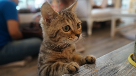 Caturday Cat Cafe – Dine With Gorgeous Cats In Bangkok Thailand