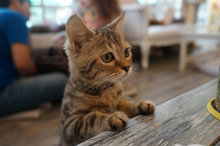Curious cats at Caturday Cats Cafe - AspirantSG