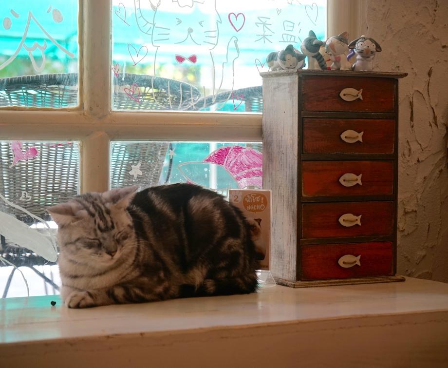 Cat By The Window Caturday Cafe Bangkok - AspirantSG