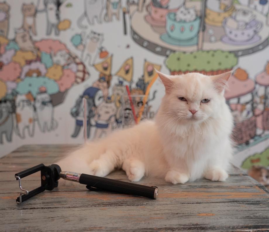 Cats Selfies Caturday Bangkok - AspirantSG