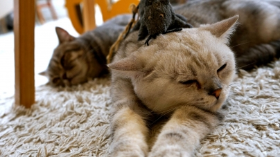 Purr Cat Cafe Club – Purrfect Kitty Meal In Bangkok, Thailand