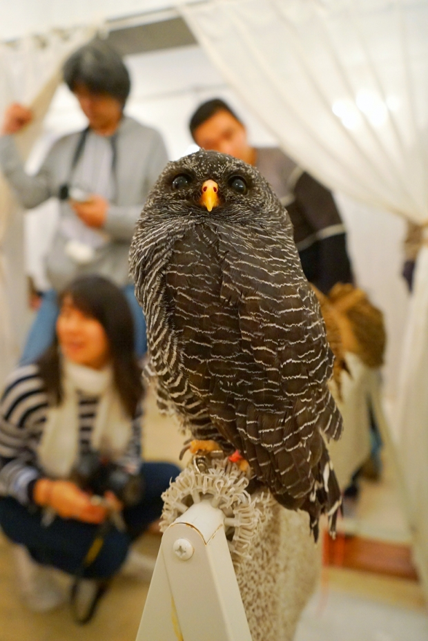 Choosing Your Owl At Akiba Fukurou Owl Cafe - AspirantSG