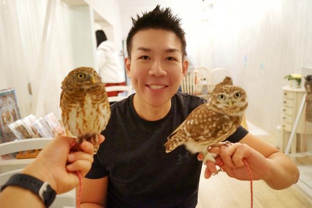 Managing Mr Yamashita at Akiba Fukurou Owl Cafe - AspirantSG