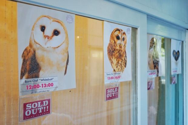 Book Time Slot At Akiba Fukurou Owl Cafe In Advance - AspirantSG