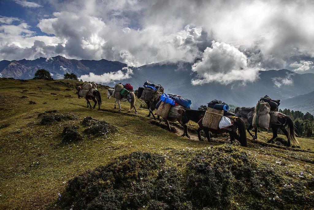 Jitchu Drake Bhutan - AspirantSG