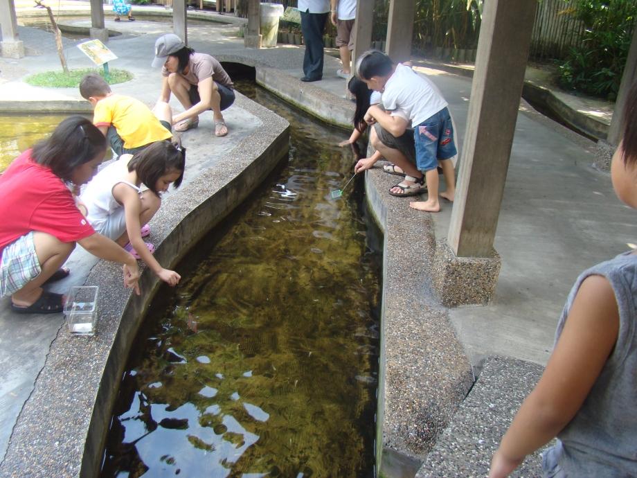 Longkang Fishing Qianhu Singapore - AspirantSG