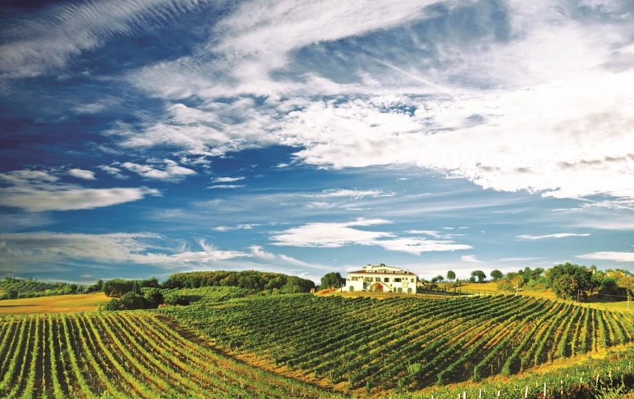 Stopover A Vineyard in Chianti, Tuscany - AspirantSG