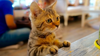 Top Pet Cafes – Best Cats & Dogs Cafes in Bangkok Thailand