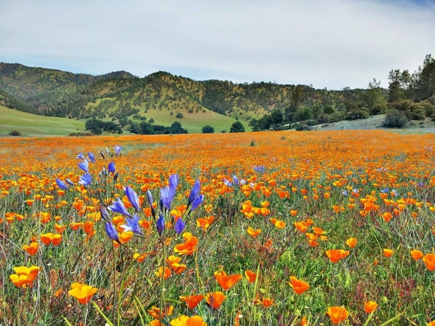 Berryessa Snow Mountain National Monument, North California - AspirantSG