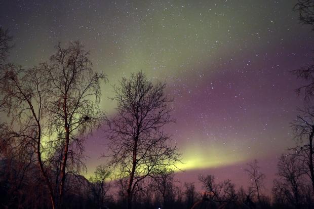 Grand Aurora - AspirantSG