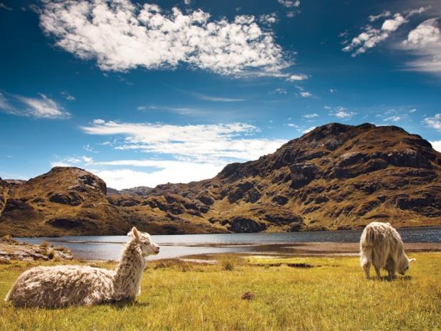 El Cajas National Park, Ecuador - AspirantSG