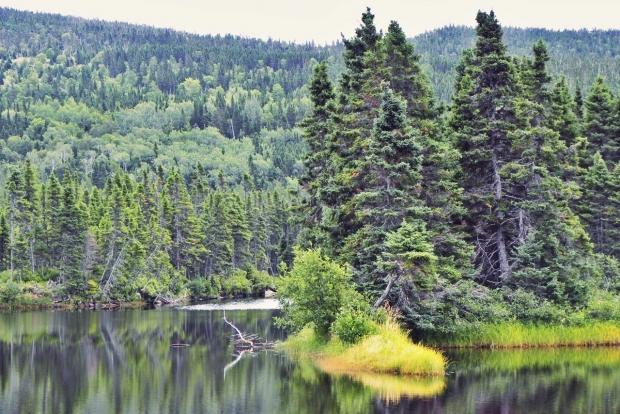 Terra Nova National Park - AspirantSG