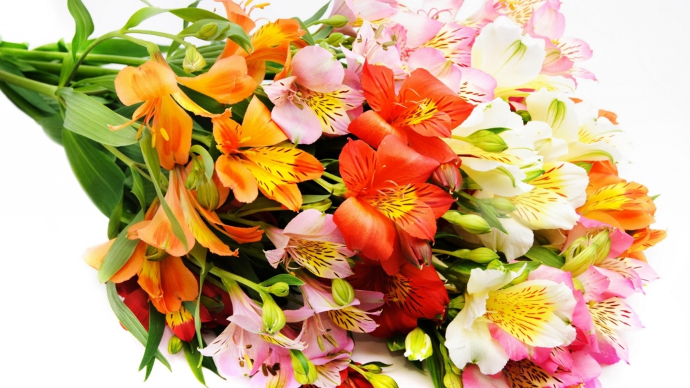 Alstroemeria Bouquet For Valentine's Day - AspirantSG