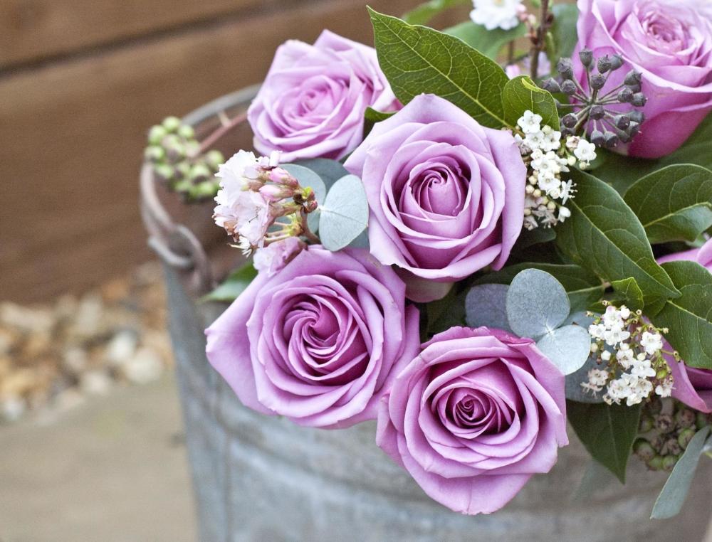 Lavender Roses for Valentine's Day - AspirantSG