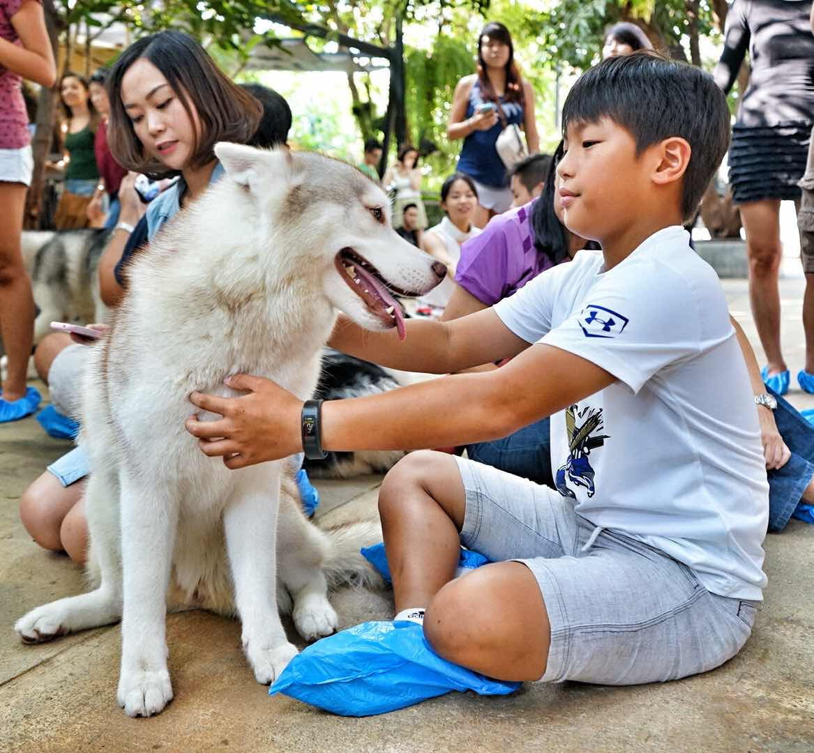 Boy With Husky At Neverland Siberian True Love Cafe, Bangkok - AspirantSG