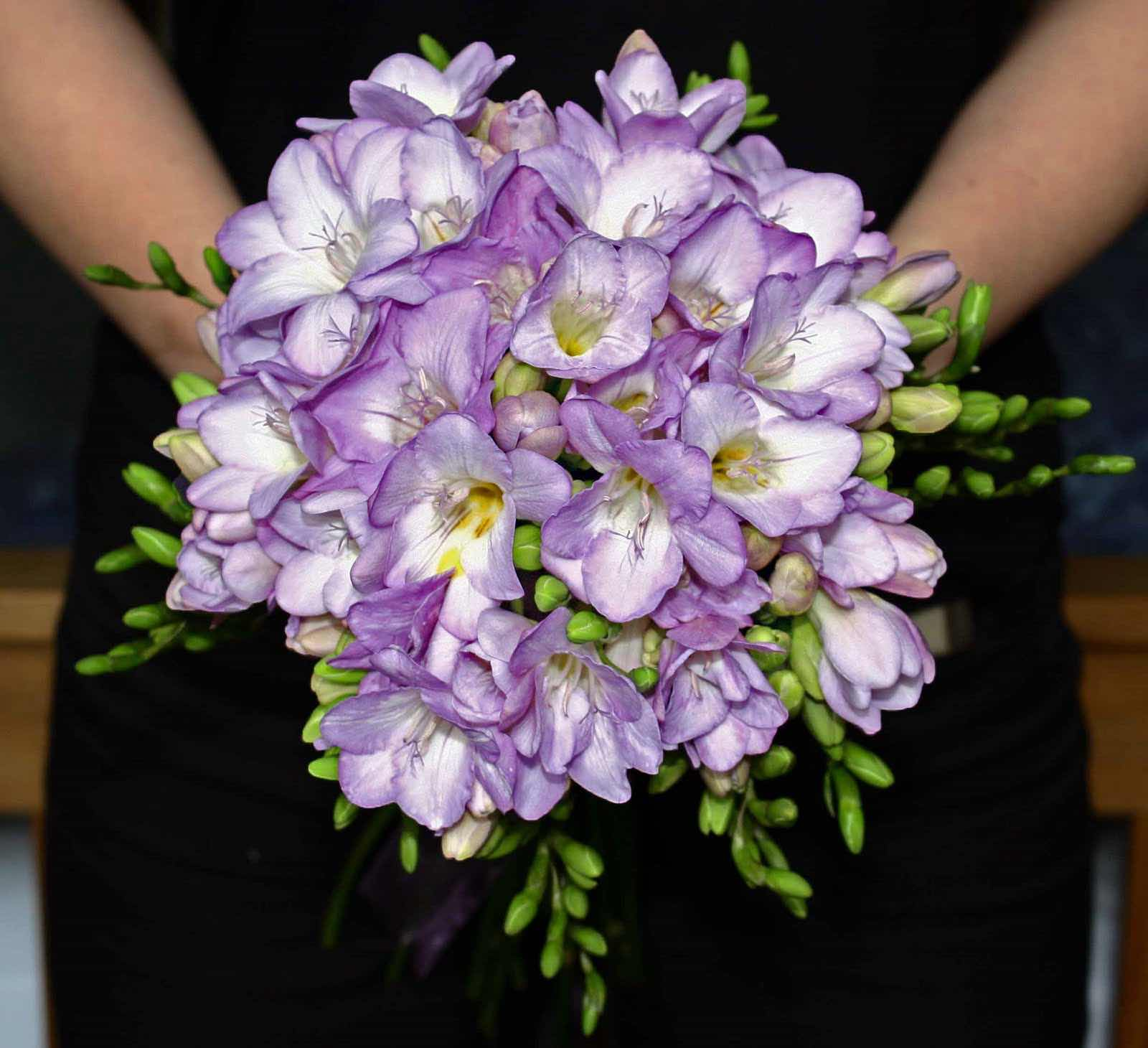 Freesia For Wedding - AspirantSG