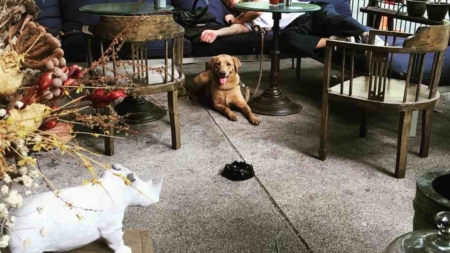 Top Bangkok Cafes – Best Cafes in Phrom Phong Thailand