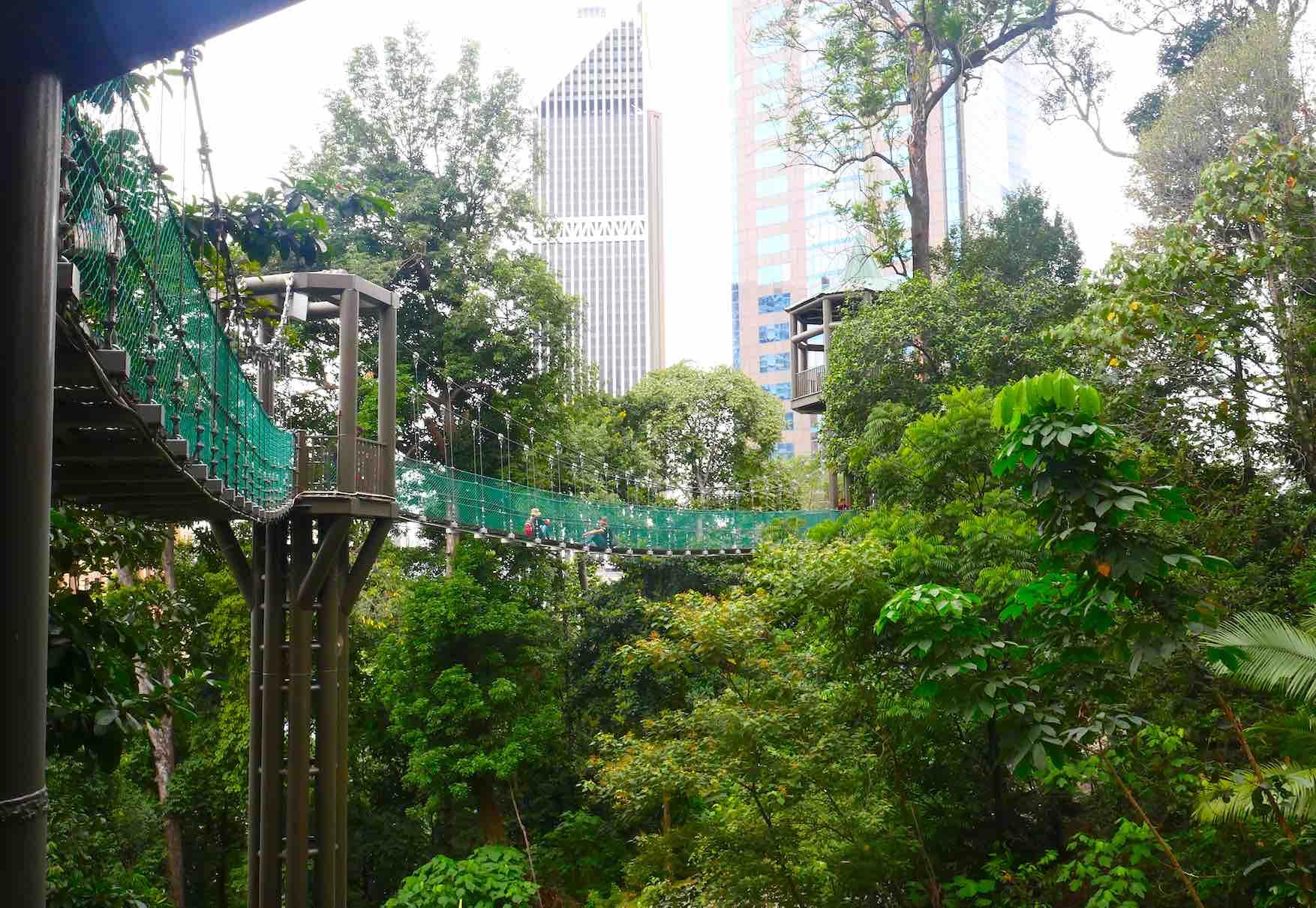 kuala-lumpur-canopy-walk-up-bukit-nanas-aspirantsg