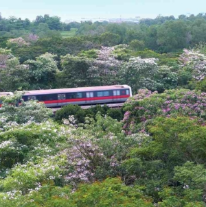 Quick & Easy Ways To Making More Green Spaces In Singapore