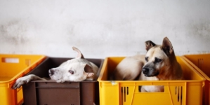 Journey to Home – OSCAS Dogs Adoption Drive & Fundraiser