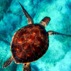 6 Aquatic Encounters That Will Make You Want To Visit The Philippines