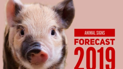 2019 Chinese Zodiac Forecast – 12 Animal Signs Luck In Year Of The Boar