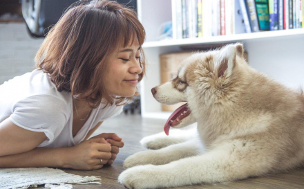 Four Tips To Find The Food Your Dog Will Love