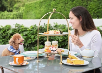 The Murray Paws For Tea – Enjoy Afternoon Tea With Pets In Hong Kong!