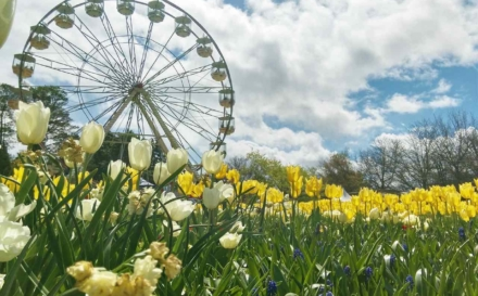 Top 10 Canberra Family-friendly Attractions In Australia's Capital