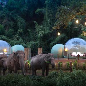 Anantara Golden Triangle Elephant Camp & Resort Jungle Bubbles