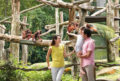 Wildlife Staycation Packages – Staycations On The Wild Side In Singapore