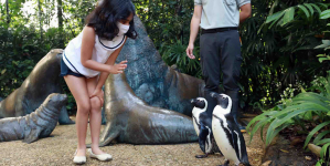 Wildlife Reserves Singapore Launched Adopt An Animal Programme