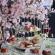 Janice Wong Spring Sakura Afternoon Tea – Taste Japan In Singapore
